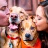 18 очаровательных примеров, как реагируют животные, когда их целуют в голову