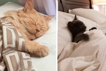 18 фотодоказательств, что кровать становится уютней, если в ней спит кошка