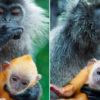 Чудесная метаморфоза: 8 детенышей животных, которые не похожи на себя больших