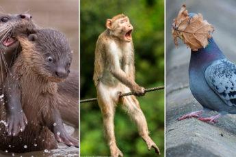 Объявлены финалисты конкурса самых смешных фотографий животных: 40 самых смешных из них