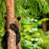 10 самых смешных снимков животных с конкурса Comedy Wildlife Photography
