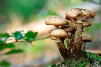 От Китая до Финляндии: лучшие страны по всему миру для сбора грибов