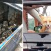 11 случаев, когда дикие звери оказывались в самых неожиданных местах и удивляли людей