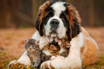 Милейшее создание: 10 самых добрых пород собак на свете!