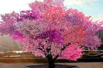 Фантастическое дерево-гибрид, на котором растет 40 видов фруктов!