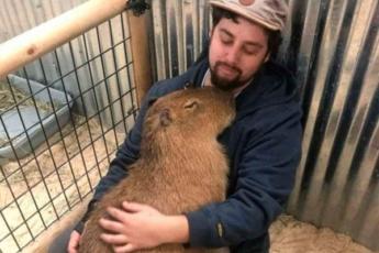 18 фотографиий, которые доказывают, что животные на 99 % состоят из любви